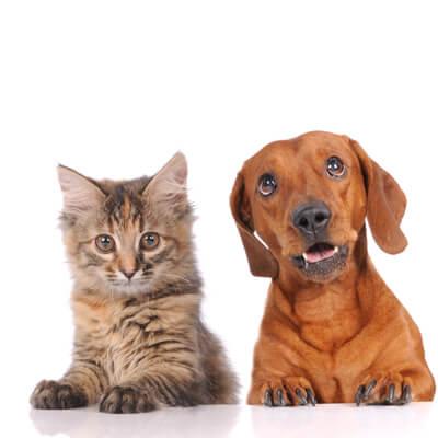 Arlington Cat And Dog Hospital Nj